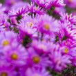 Purple flower — Stock Photo #33815471