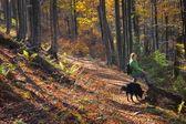 A walk with a friend — Stock Photo