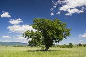The green tree — 图库照片