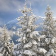 Winter idyll — Stockfoto