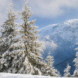 Stockfoto: Winter idyll