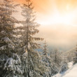 Morning glow in the winter mountains — Stock Photo