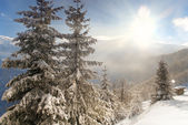 Fresh winter in the mountains — Stock Photo