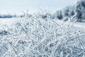 ледяной филиалов — Стоковое фото