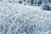 Icy branches — Stock Photo