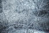 Rami ghiacciati — Foto Stock