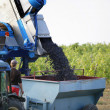Tractor harvesting grapes — Stock Photo #13832089