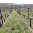 Perspective on vine rows - Stock Photo