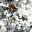 Pine tree in the snow — Stock Photo
