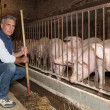 Farmer feeding pigs — Stock Photo #13935522