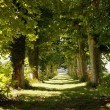 Avenue of trees — Stock Photo