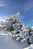 Bir yaz günü karlı ağaçların — Stok fotoğraf