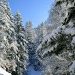 Snow on trees — Stockfoto