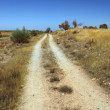Stock Photo: Dirt path