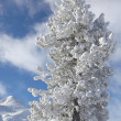 Stock Photo: Snowy winter