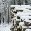 Firewood in the snow - Stock Photo