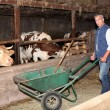 Stock Photo: Farmer in cattle shed