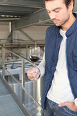 Winemaker in plant — Stock Photo