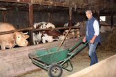 Farmer in a cattle shed — ストック写真