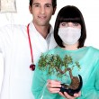 Doctor and nurse with drip and bonsai — Stock Photo
