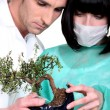 Doctors examining bonsai - Stock Photo