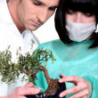 Stock Photo: Doctors examining bonsai