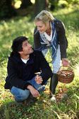 Happy couple gathering mushrooms — Stock Photo
