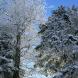 Trees covered with snow — Stock Photo