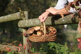 Gathering chestnuts and mushrooms in the forest — Stock Photo