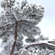 Snow-covered branches — Stock fotografie