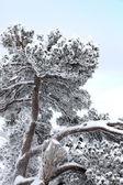Karla kaplı şubeleri — Stok fotoğraf