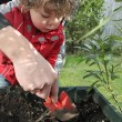 Stock Photo: Boy planting seeds