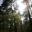 Стоковое фото: Light breaking through clearing in trees