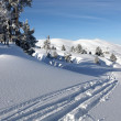 Stock Photo: Tracks in snow
