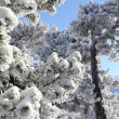 Snow covered trees — Stock Photo #15605533