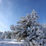 A winter landscape — Stock Photo