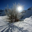 Sun shining on snow covered tree — Stock Photo