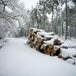 Snow covered logs by the side of the road — Stock Photo