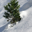Single tree on snowy hill - Stock Photo