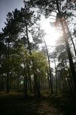 Luz rompendo uma clareira nas árvores — Foto Stock