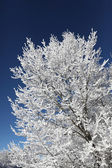 Зимний белый дерево — Стоковое фото