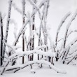 Snow-covered branches - Stock Photo