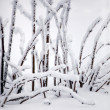 branches recouvertes de neige — Photo