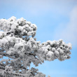Snow on branches — Stock Photo