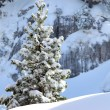Stock Photo: Snowy tree on a mountain