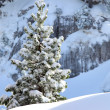 Stock Photo: Snowy tree on mountain