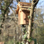 Vogel huis — Stockfoto