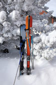 Skis stuck in the snow — Stock Photo