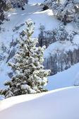Snowy tree on a mountain — Stock Photo