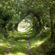 Country lane — Stock Photo